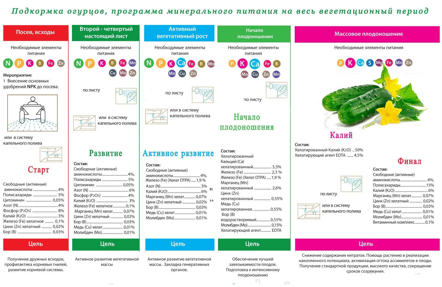 podkormka-ogurtsov-foto-video-chem-i-kak-udobryat-ogurtsy-4