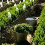 Капельный полив: полив для дачи без затрат