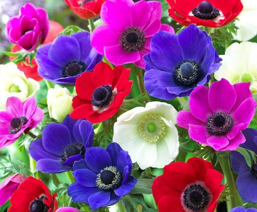 показать цветочки фото даже главный приз