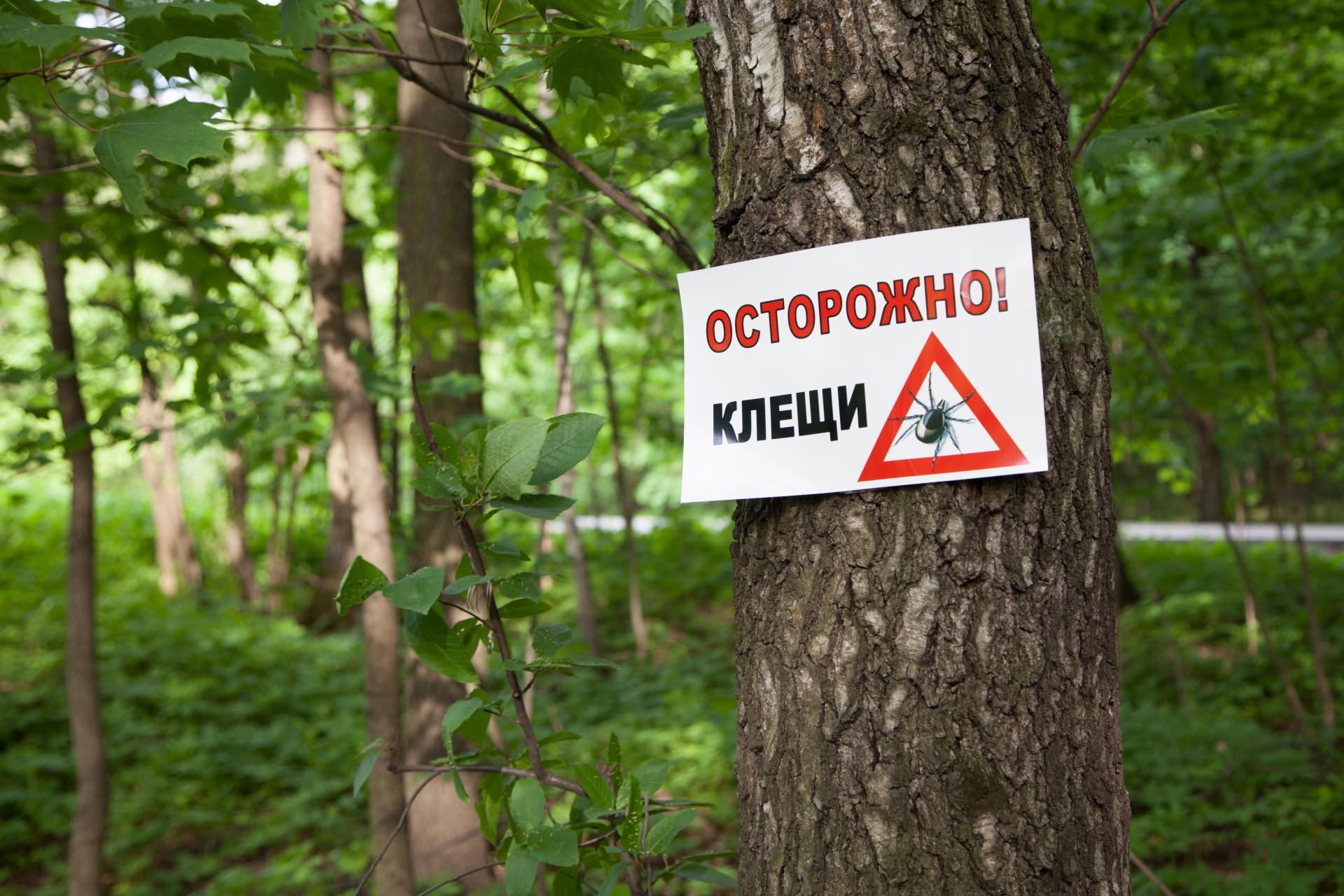 dezinfektsiya-kleshha-foto-video-obrabotka-uchastka-i-metody-zashhity-ot-kleshhej-4