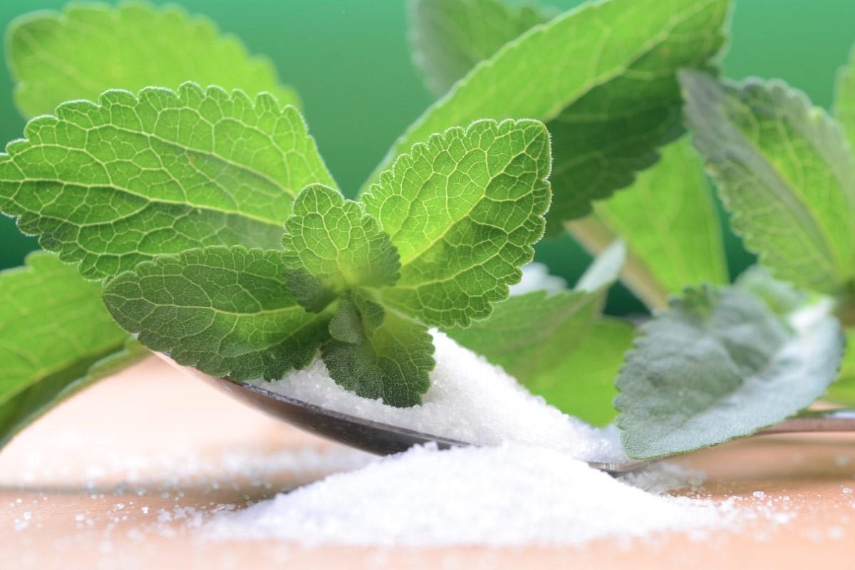 steviya-medovaya-foto-video-retsepty-primeneniya-poleznye-svojstva-vyrashhivanie-i-uhod-12