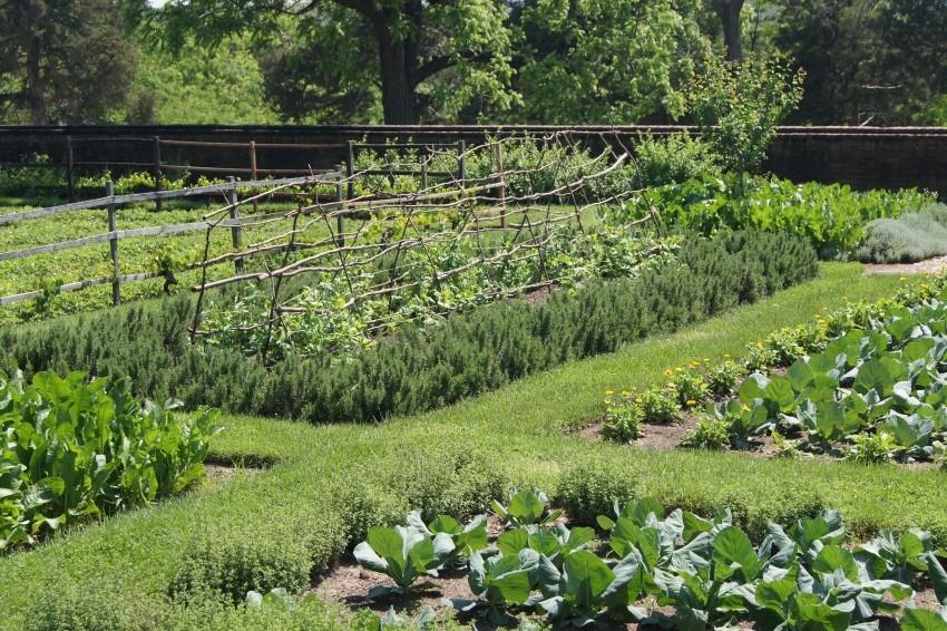 Грядки на огороде.