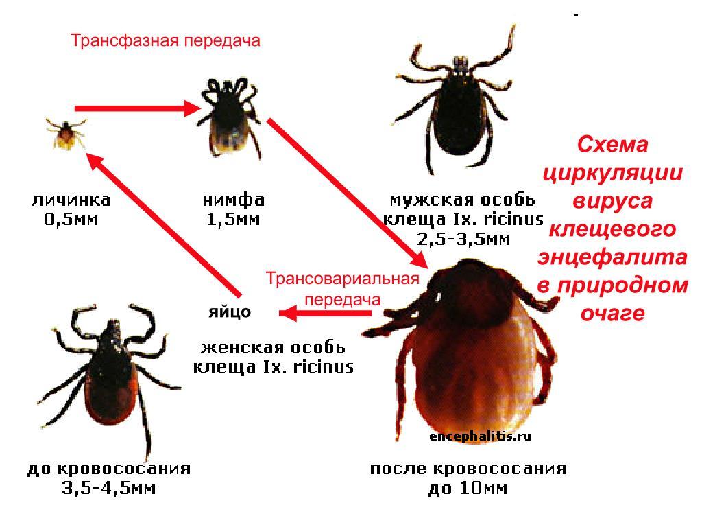 dezinfektsiya-kleshha-foto-video-obrabotka-uchastka-i-metody-zashhity-ot-kleshhej-3