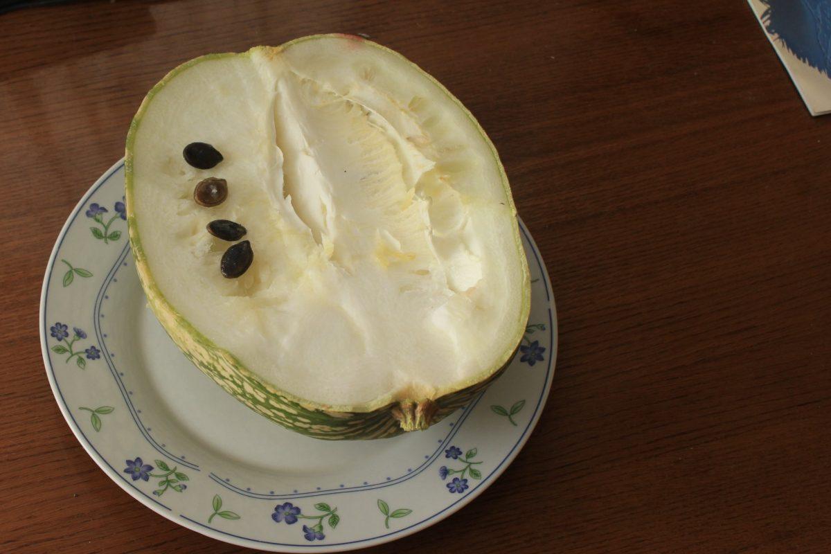 Фицефалия или тыква фиголистная (Cucurbita ficifolia or Chilacayote).