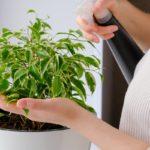 Подкормка комнатных растений весной