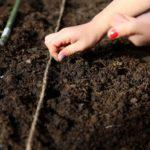 Посев семян в открытый грунт: сроки посева