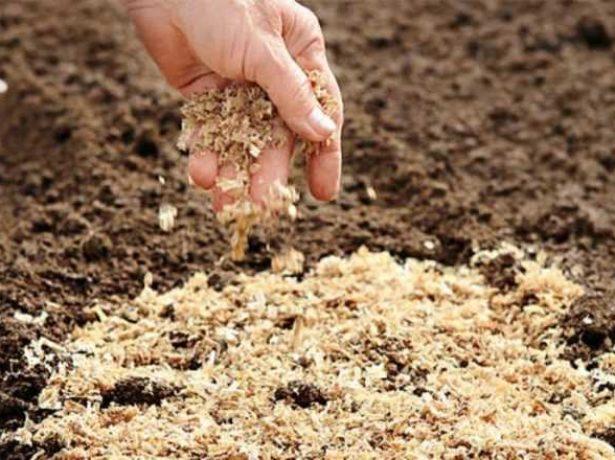 Ферментированные опилки укладывают на грядку слоем 6–8 см.