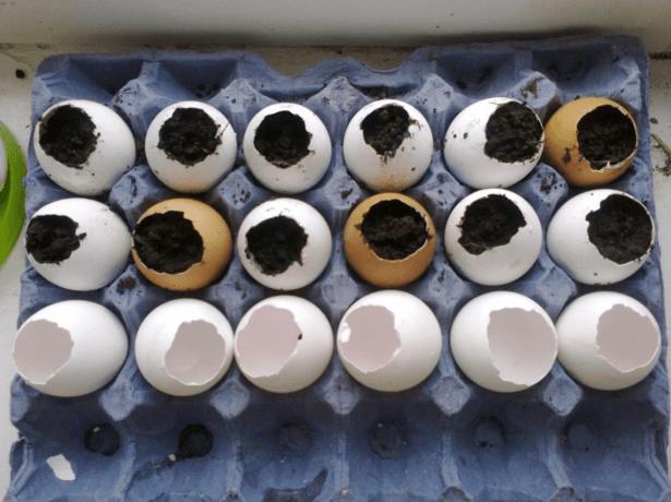 Наполненные питательной почвой скорлупки устанавливают в картонную упаковку для яиц.