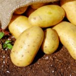 Предпосевная подготовка картофеля