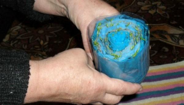 «Улитку» с посеянными семенами помещают в обрезанную пластиковую бутылку.