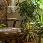 Фитонциды: комнатные растения, для целебного воздуха в доме