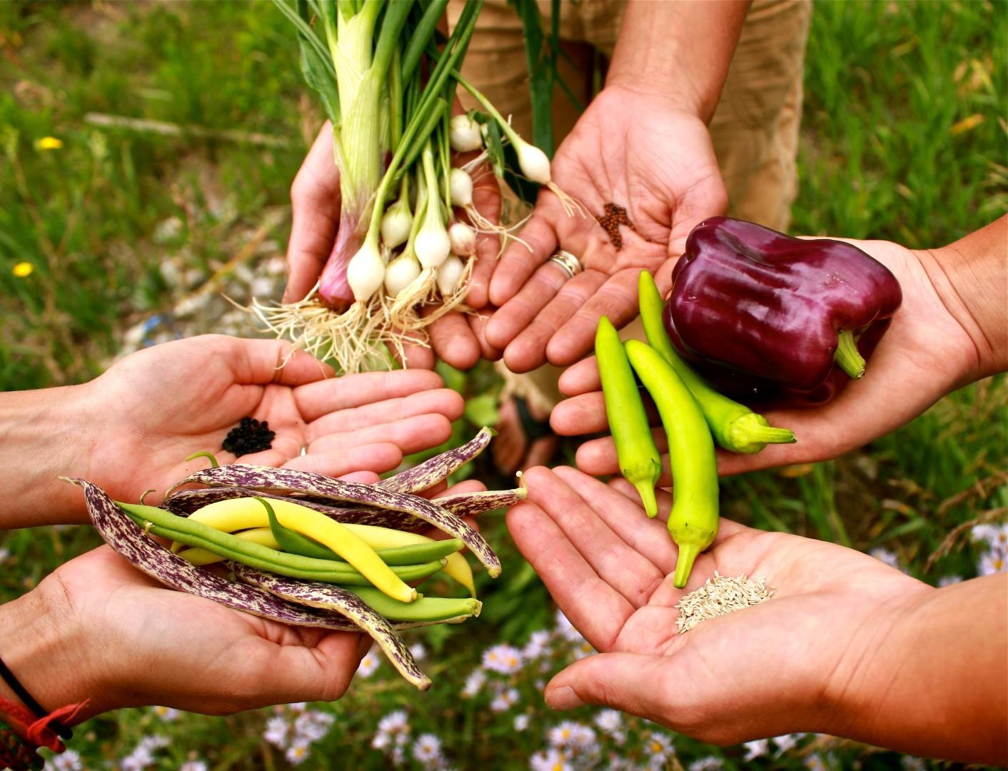 semena-gibrida-arbuza-syngenta-vegetativnye-i-selektivnye-svojstva