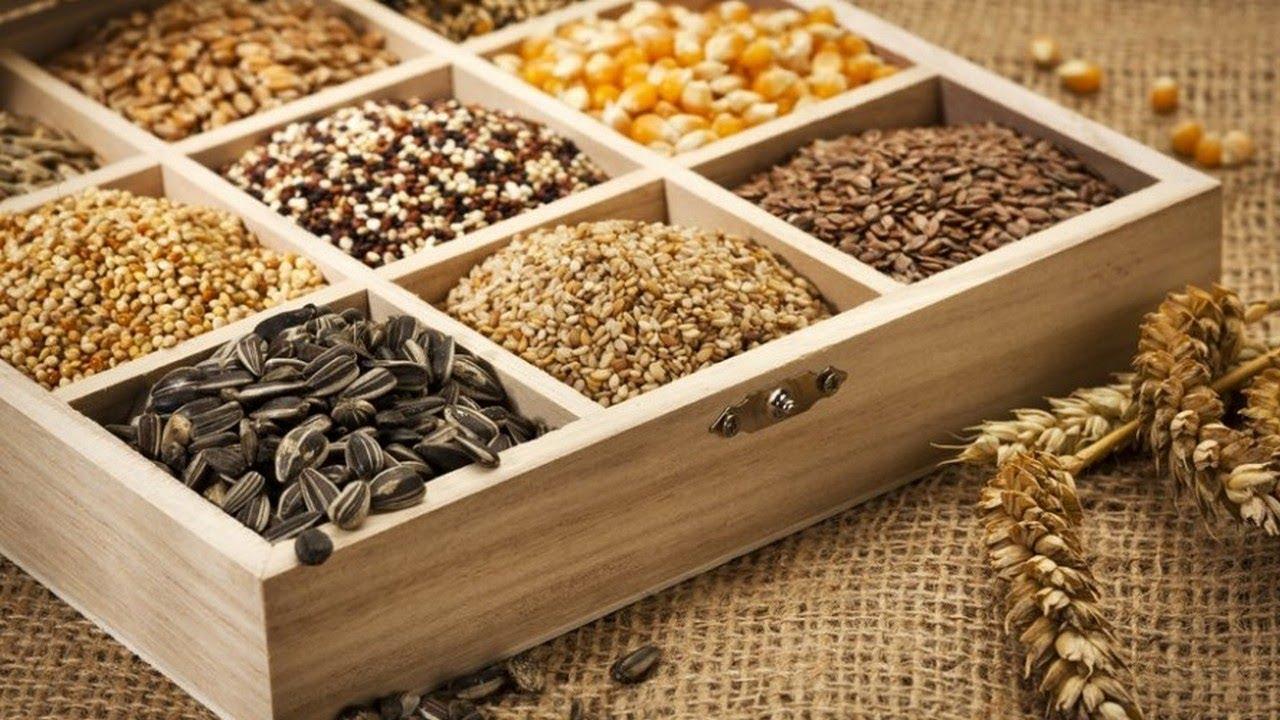 semena-gibrida-arbuza-syngenta-vegetativnye-i-selektivnye-svojstva-2
