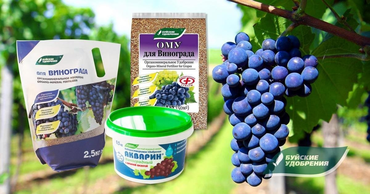 podkormka-vinograda-kogda-kakie-i-skolko-vnosit-udobrenij-pod-vinogradnyj-kust-2