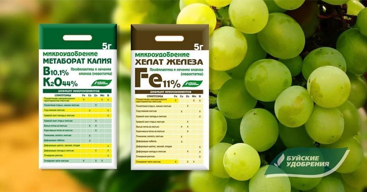 podkormka-vinograda-kogda-kakie-i-skolko-vnosit-udobrenij-pod-vinogradnyj-kust-3