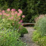 Клеома: фото, описание растения, условия выращивания и уход
