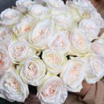 Пионовидная роза: изысканное растение, не требующее особого ухода