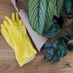 Обработка комнатных растений: правила применения химикатов