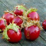 Колючий помидор: фото, описание личи, особенности выращивания в средней полосе