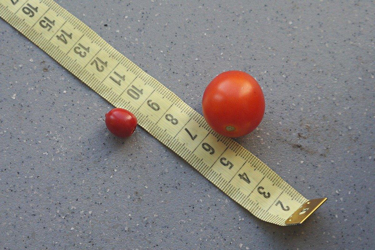 kolyuchij-pomidor-foto-opisanie-lichi-osobennosti-vyrashhivaniya-v-srednej-polose-7