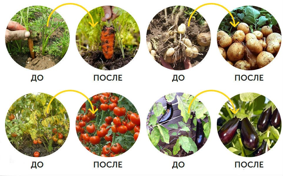 agromaks-otzyvy-pokupatelej-instruktsiya-po-primeneniyu-udobreniya-4