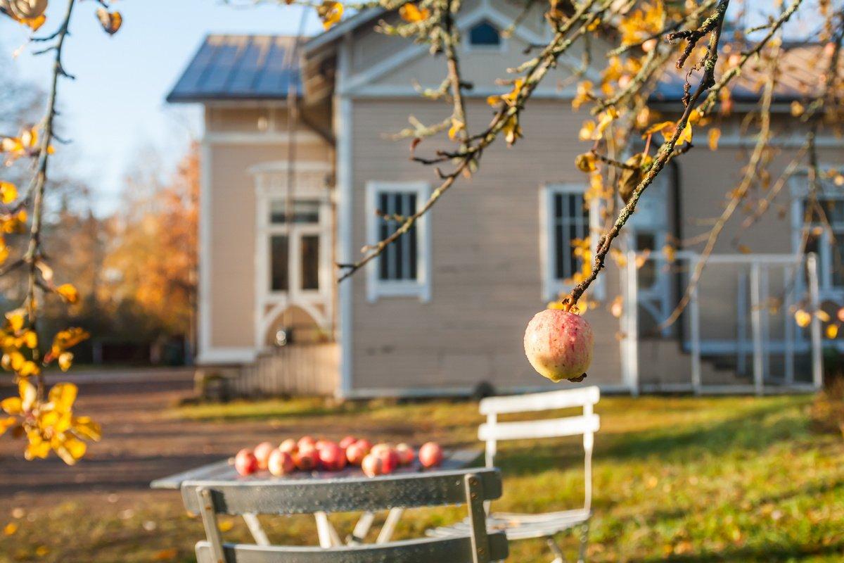 uhod-za-plodovymi-derevyami-osenyu-pravila-uhoda-za-plodovym-sadom-1