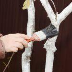 Уход за плодовыми деревьями осенью: правила ухода за плодовым садом