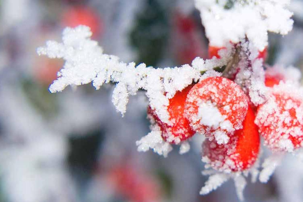 lunnyj-kalendar-ogorodnika-na-dekabr-2020