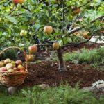 Что означает маркировка саженцев: на что обратить внимание при покупке плодовых
