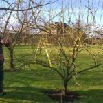 Уход за яблоней весной: какой уход необходим яблоне после зимы