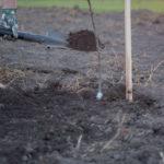 Посадка яблони весной: как подготовить и правильно провести высадку
