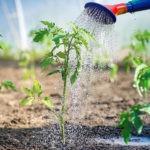 Как поливать в жару: правила и особенности проведения полива