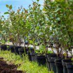 Лучшие плодовые кустарники для вашего сада