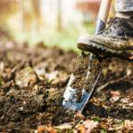 Как улучшить почву: осенние работы с почвой в саду
