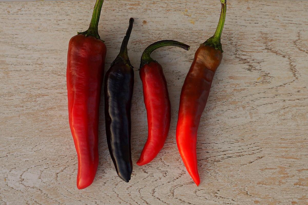 perets-chili-neostrye-sorta-foto-opisanie-lichnyj-opyt-vyrashhivaniya-2
