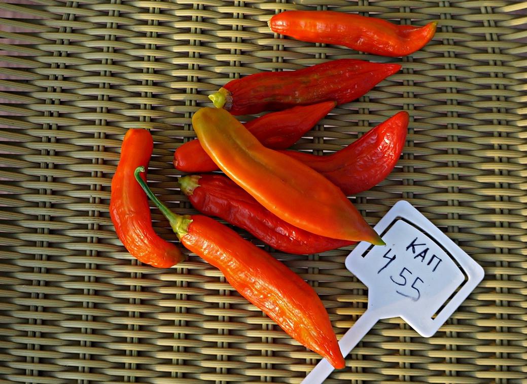 perets-chili-neostrye-sorta-foto-opisanie-lichnyj-opyt-vyrashhivaniya-5