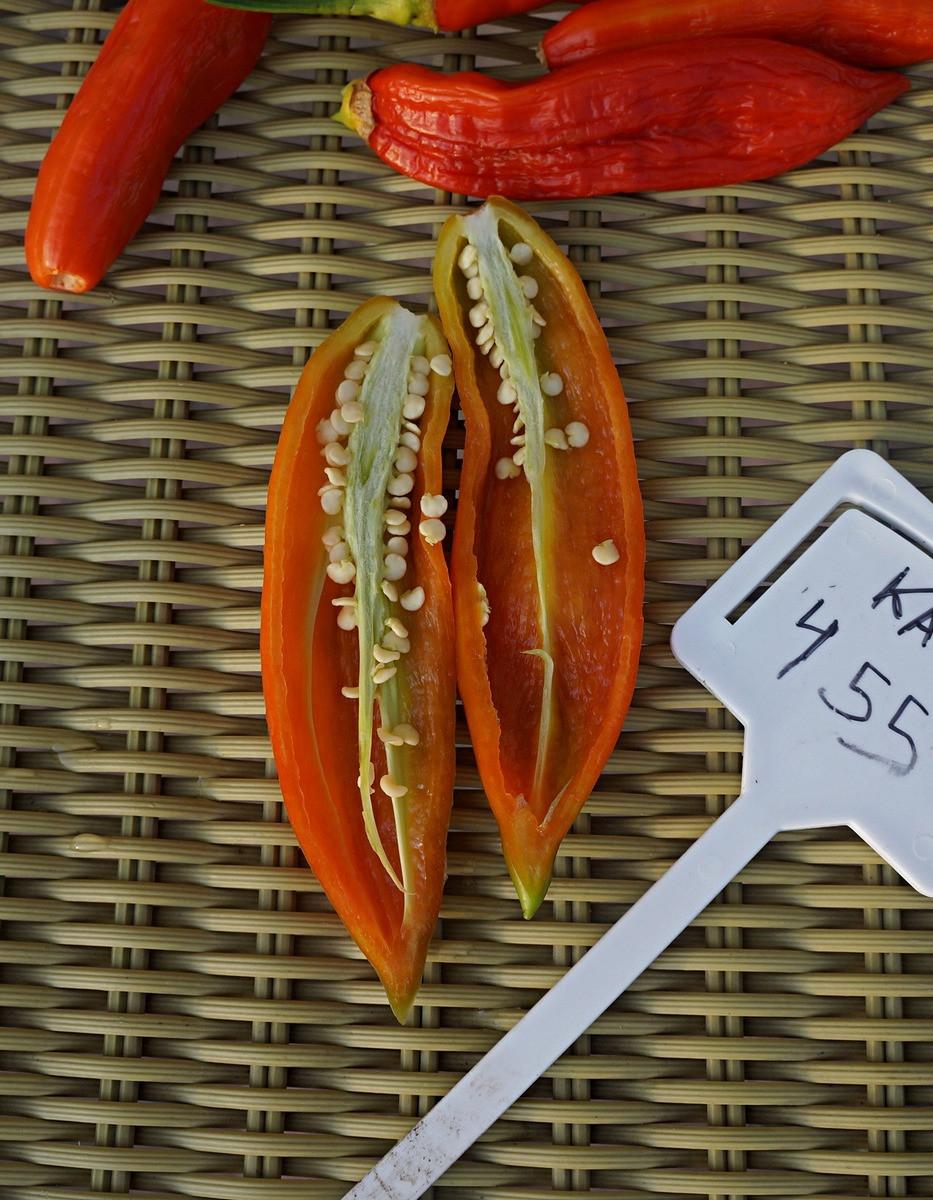 perets-chili-neostrye-sorta-foto-opisanie-lichnyj-opyt-vyrashhivaniya-6