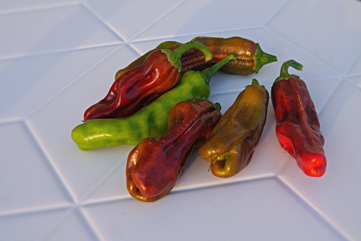 perets-chili-neostrye-sorta-foto-opisanie-lichnyj-opyt-vyrashhivaniya-8