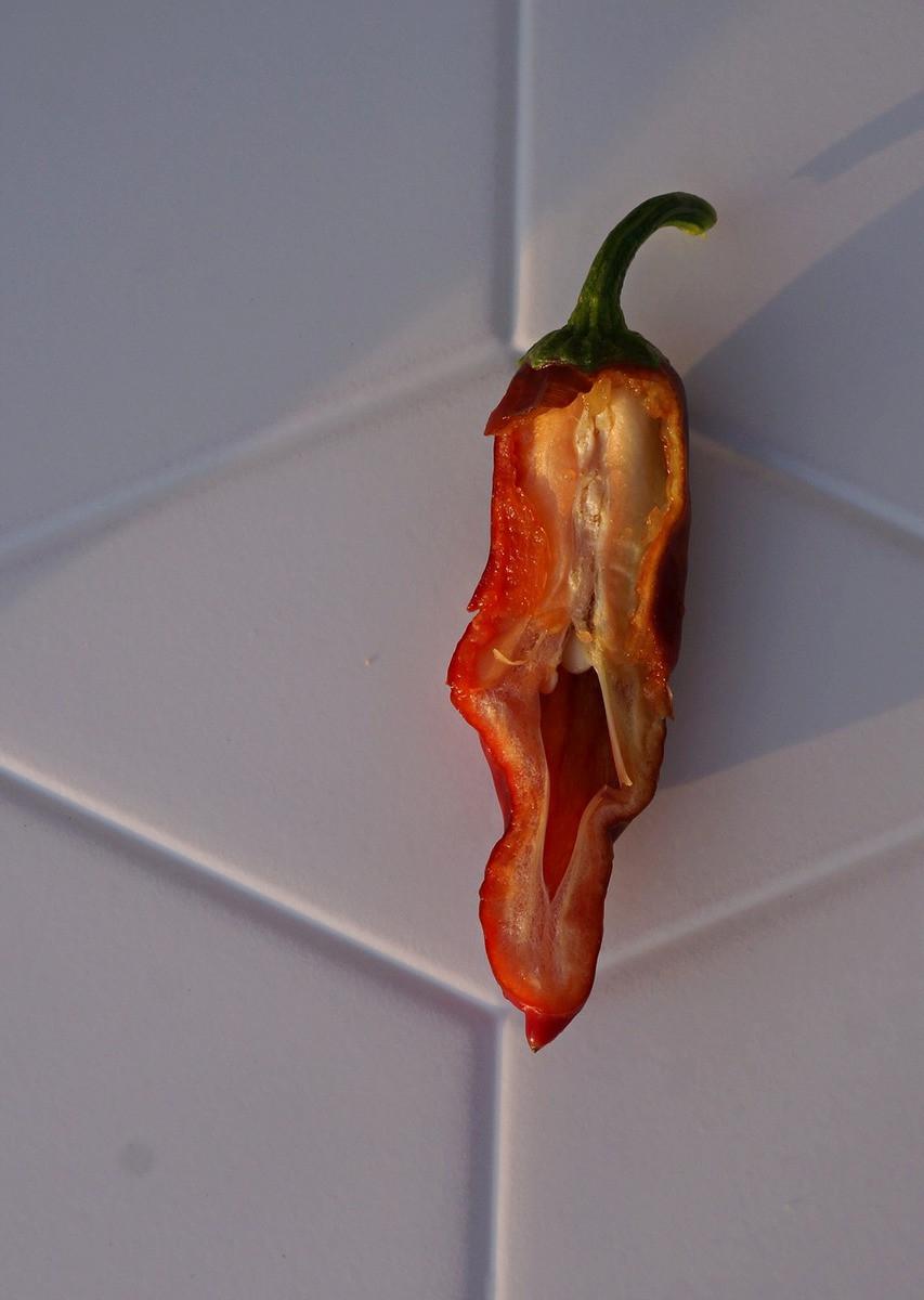 perets-chili-neostrye-sorta-foto-opisanie-lichnyj-opyt-vyrashhivaniya-9