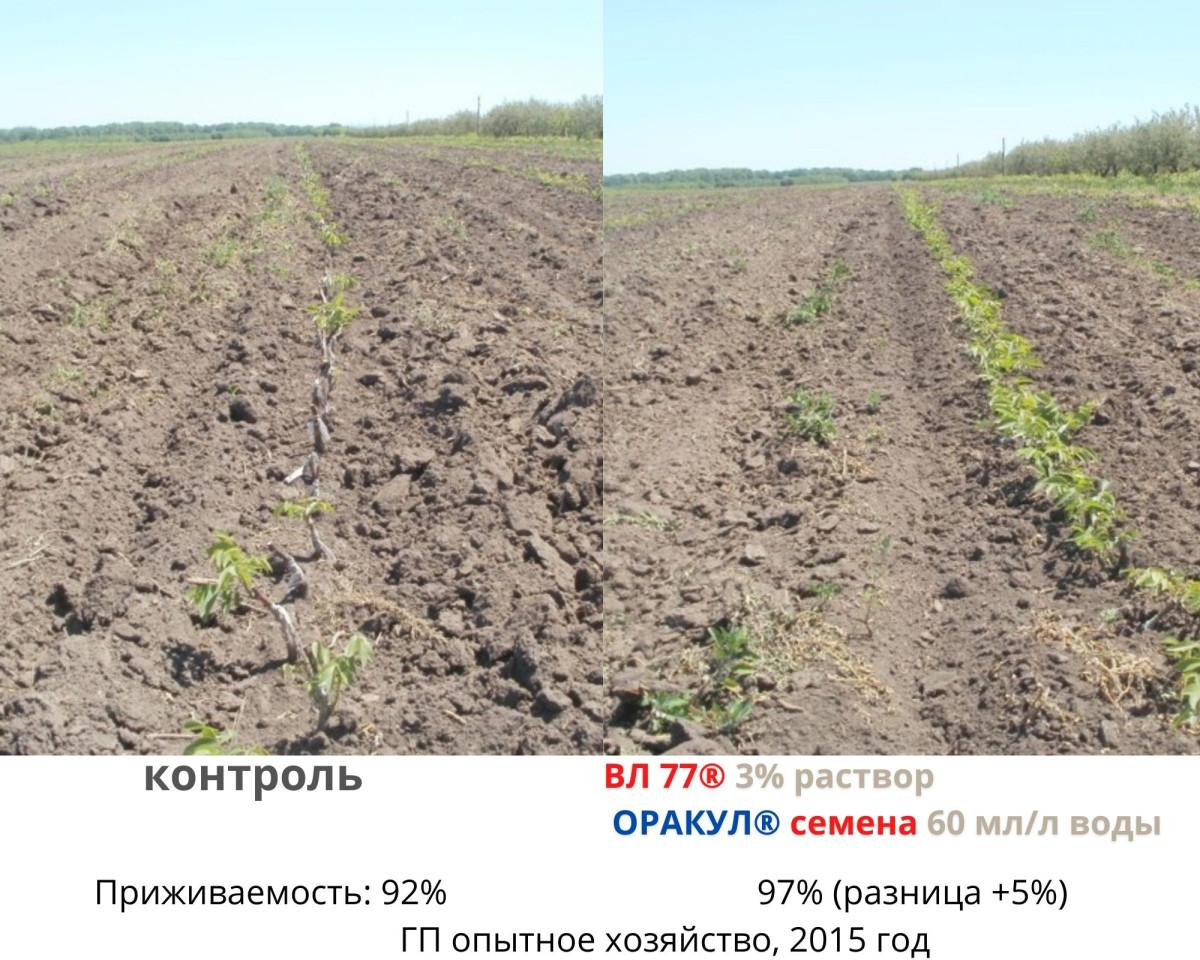 kak-zamachivat-sazhentsy-dlya-chego-neobhodimo-zamachivanie-2